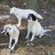 Zorro Dogsavior E. V. - Tierhilfe für den Norden Griechenlands - Schicksale - Pensionskosten