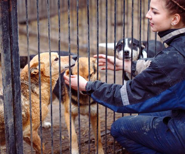 Zorro Dogsavior E. V. - Tierhilfe für den Norden Griechenlands - Hilfe vor Ort