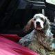Zorro Dogsavior E. V. - Tierhilfe für den Norden Griechenlands - Schicksale - Rudy