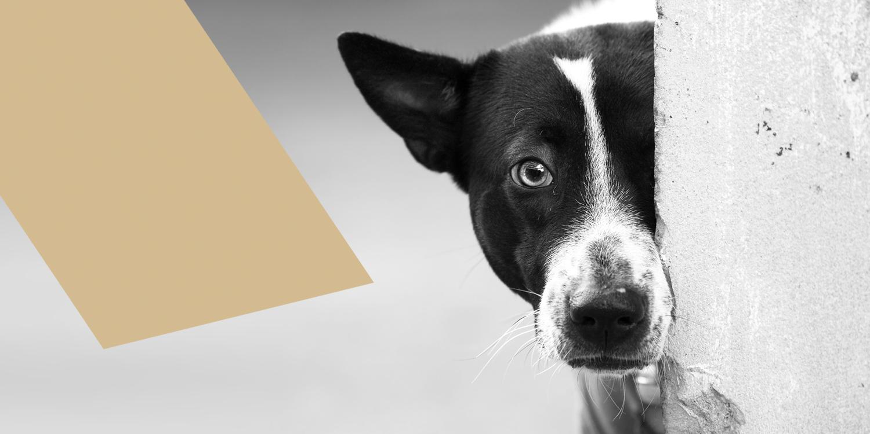 Zorro Dogsavior E. V. - Tierhilfe für den Norden Griechenlands