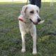Zorro Dogsavior E. V. - Tierhilfe für den Norden Griechenlands - Ein neues Zuhause - Vermittlung - Patenschaft - Hund - Bailey