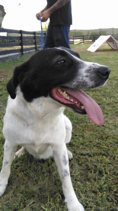 Zorro Dogsavior E. V. - Tierhilfe für den Norden Griechenlands - Ein neues Zuhause - Vermittlung - Patenschaft - Hund - Bella