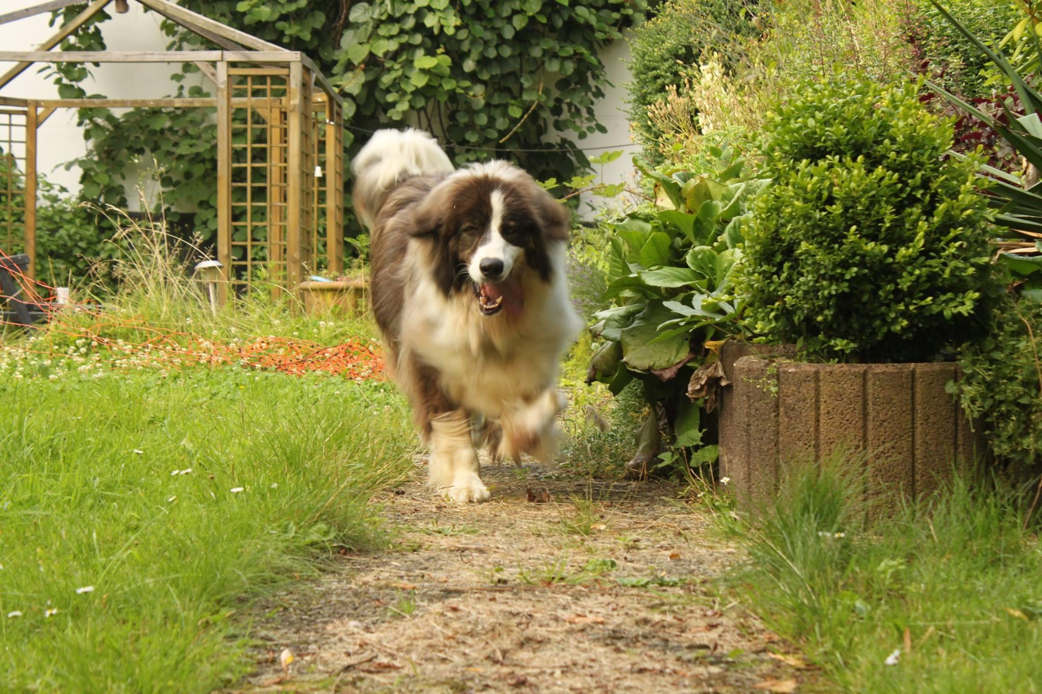 Zorro Dogsavior E. V. - Tierhilfe für den Norden Griechenlands - Ein neues Zuhause - Vermittlung - Patenschaft - Hund - Muray