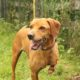 Zorro Dogsavior E. V. - Tierhilfe für den Norden Griechenlands - Ein neues Zuhause - Vermittlung - Patenschaft - Hund - Special