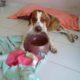 Zorro Dogsavior E. V. - Tierhilfe für den Norden Griechenlands - Ein neues Zuhause - Vermittlung - Patenschaft - Hund - Tommy