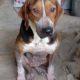 Zorro Dogsavior E. V. - Tierhilfe für den Norden Griechenlands - Ein neues Zuhause - Vermittlung - Patenschaft - Hund - Hannah