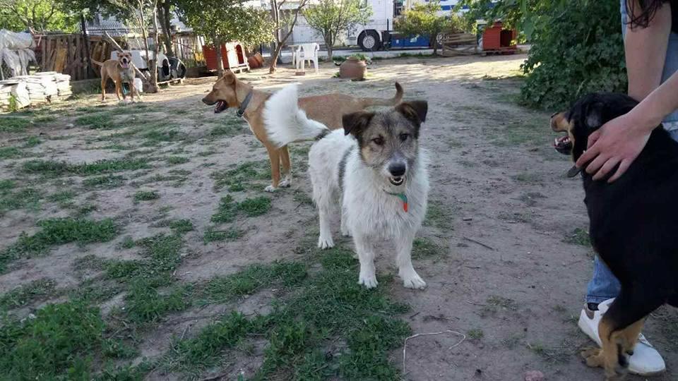 Zorro Dogsavior E. V. - Tierhilfe für den Norden Griechenlands - Ein neues Zuhause - Vermittlung - Patenschaft - Hund - Alitis