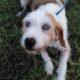 Zorro Dogsavior E. V. - Tierhilfe für den Norden Griechenlands - Ein neues Zuhause - Vermittlung - Patenschaft - Hund - Bonnie