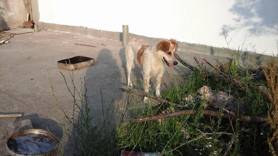 Zorro Dogsavior E. V. - Tierhilfe für den Norden Griechenlands - Ein neues Zuhause - Vermittlung - Patenschaft - Hund - Panda