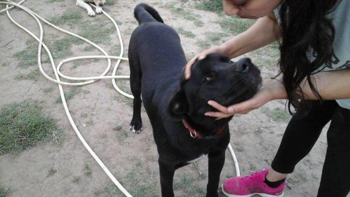 Zorro Dogsavior E. V. - Tierhilfe für den Norden Griechenlands - Ein neues Zuhause - Vermittlung - Patenschaft - Hund - Taz