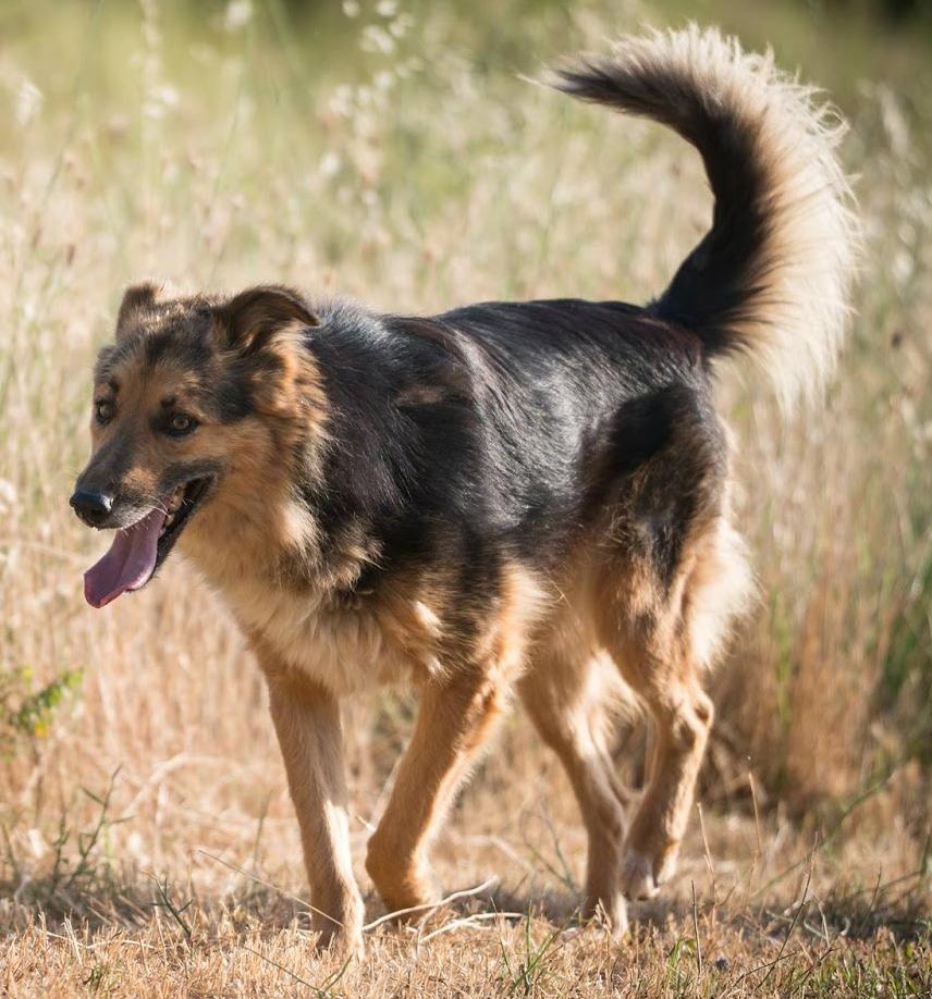 Riri_Zorro-Tierschutz