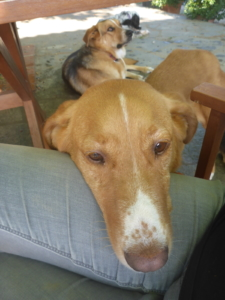doglookingforahome,dogadoption,dog