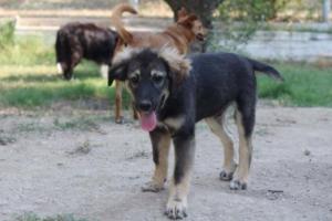 Puppy,puppyadoption ,saveapuppy